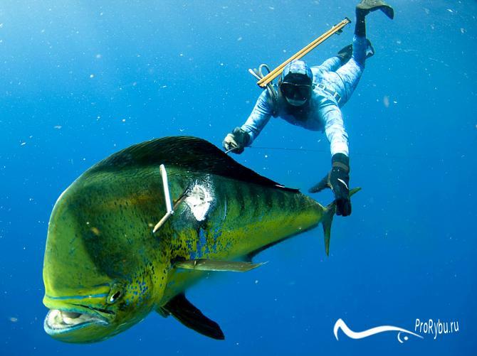 Игра подводная охота