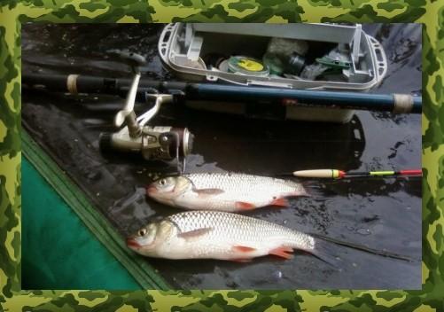 видео ловля плотвы в проводку