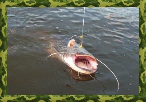 Оснастка для ловли сома на донку