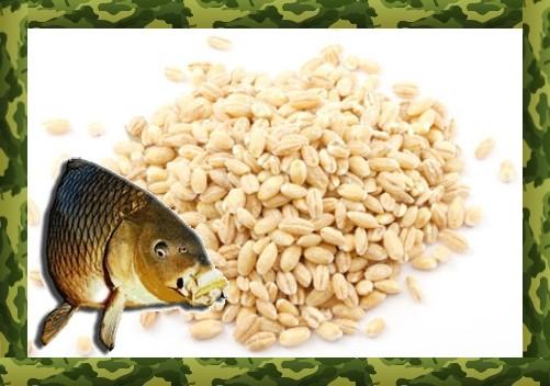 Как сделать прикормку из перловки для рыбалки