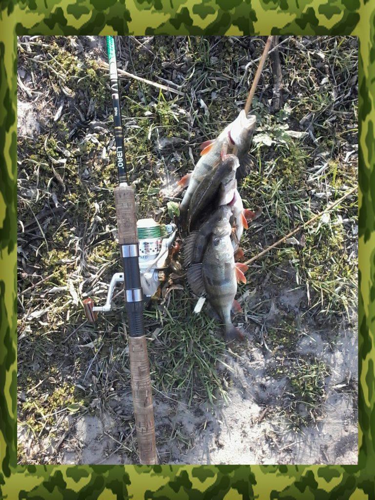 спиннинги для ловли окуня