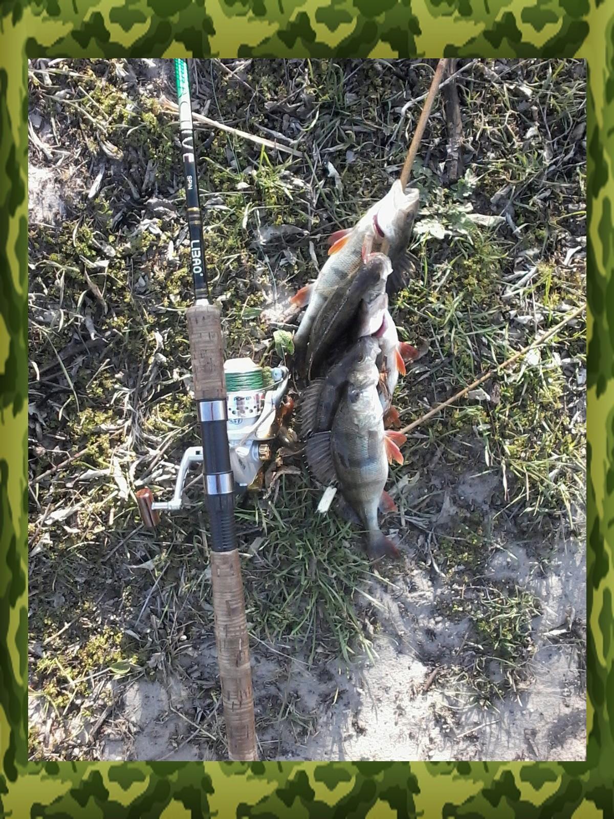 снасти для ловли окуня
