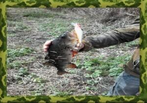 Сегодня мы расскажем о том как правильно выбрать снасти для ловли окуня на спиннинг. Подробно рассмотрим выбор катушки, удилища, лески и крючков для ловли окуня