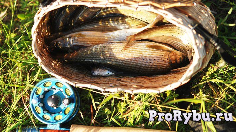 ловить рыбу на палец