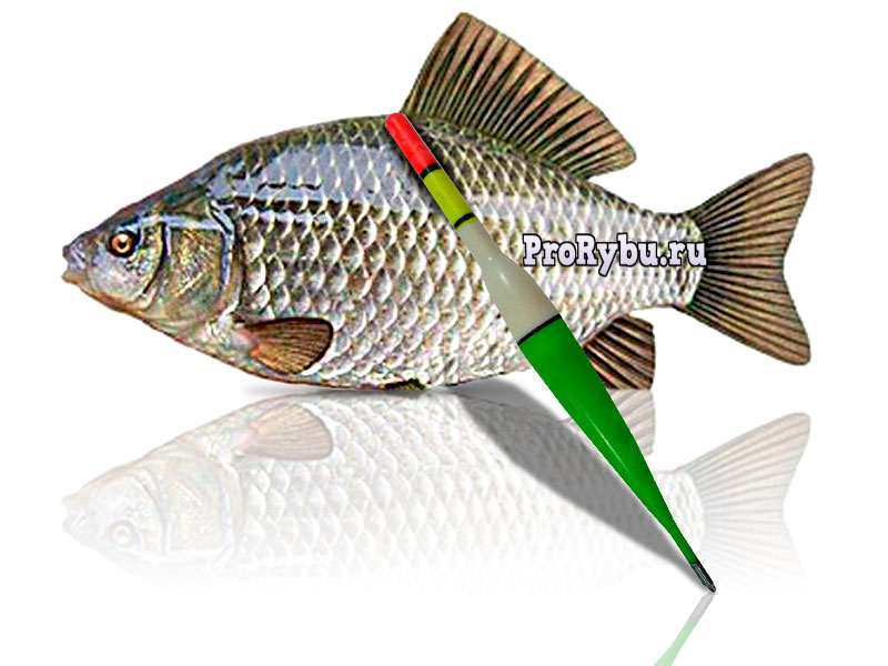секреты рыбной ловли на удочку