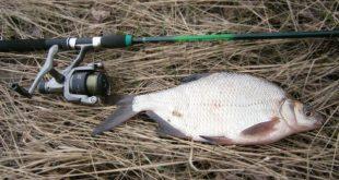 Ловля леща на фидер в канале
