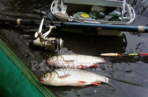 Болонское удилище. Рыбалка