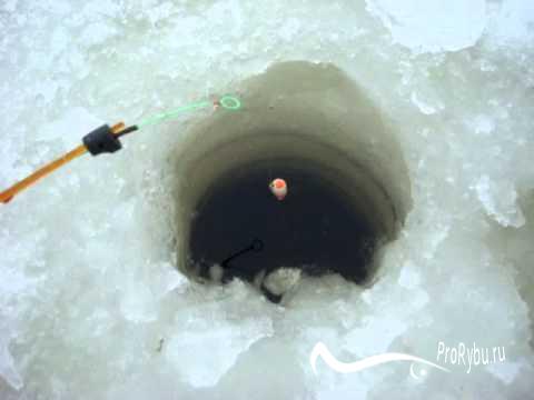 Как ловить карася зимой на поплавок