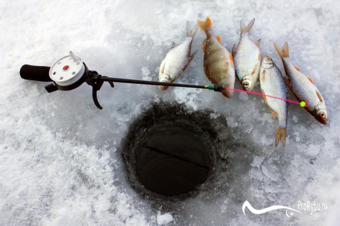 рыбалка в тюмени весной