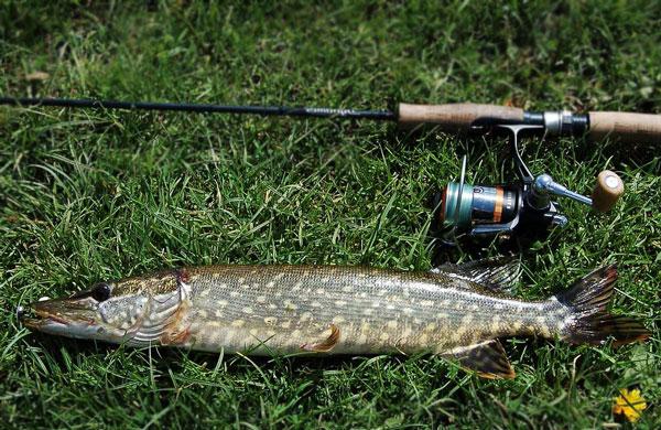 Как сделать отводной поводок для рыбалки на щуку