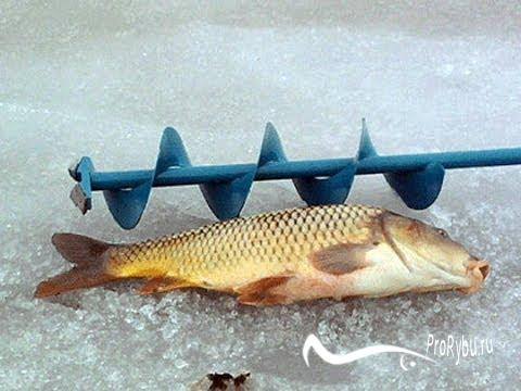 Зимняя рыбалка на карпа в декабре