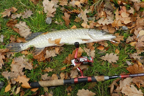 Осенняя рыбалка в Подмосковье
