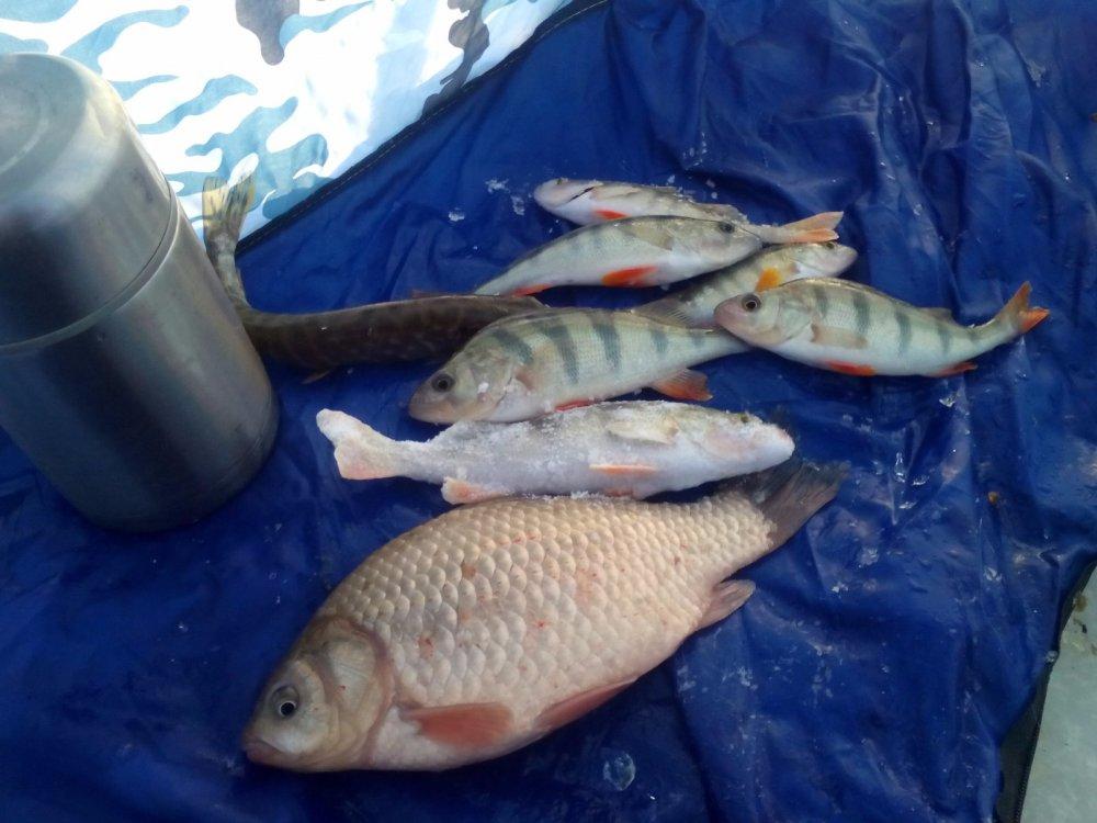 Отчет о рыбалке в Новосибирске