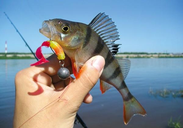 Как ловить окуня на джиг осенью?