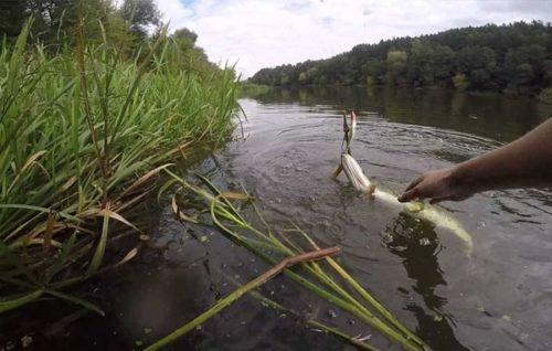 ловля рыбы в Омской области