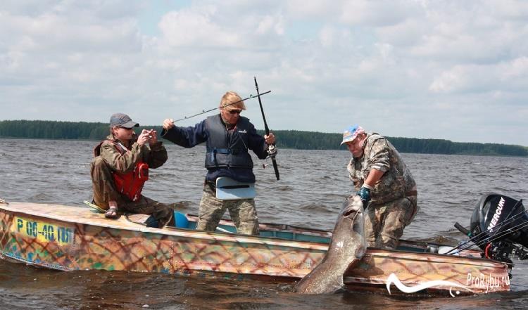 Ловля сома на донку с лодки
