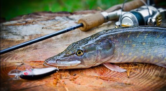 Как ловить щуку весной на малых реках