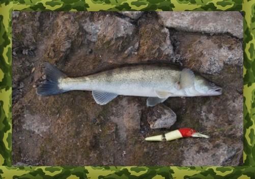 Приманки для ловли судака весной на спиннинг