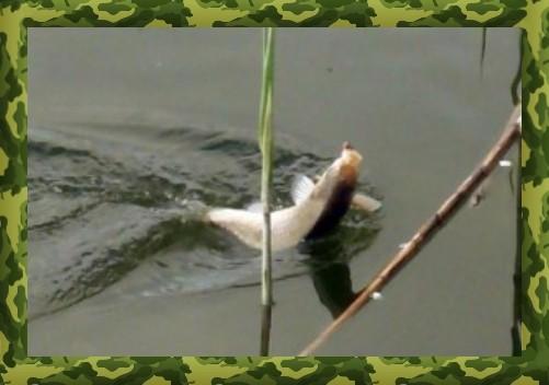 Поплавочные снасти для ловли карася