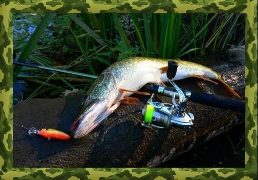 ловля щуки на большой реке