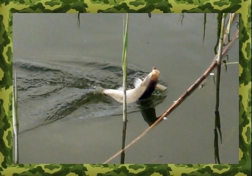 Удочка для ловли карася в камышах