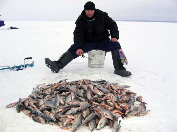 Игра мормышкой на зимней рыбалке на карася