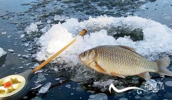 Зимняя ловля карася в декабре