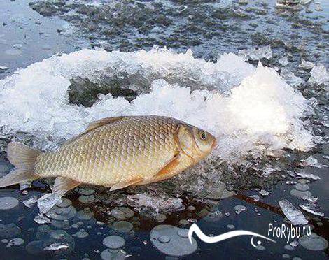 Рыбалка на карася в феврале