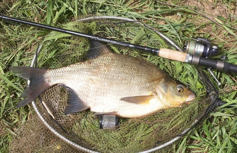Ловля леща пикером на пруду
