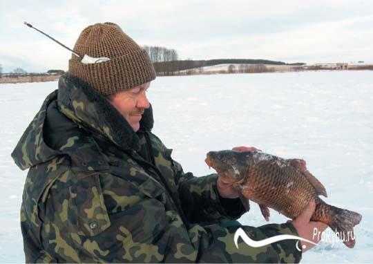 Как поймать карпа зимой в пруду