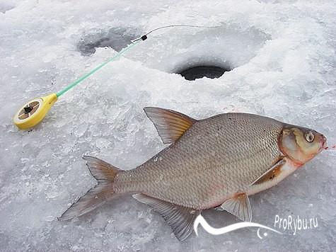 Рыбалка на леща в январе