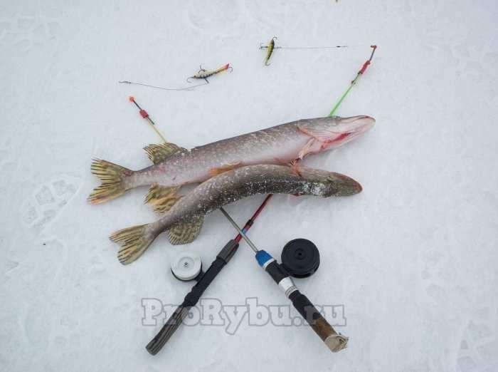 Выбор удочки для зимней рыбалки на блесну