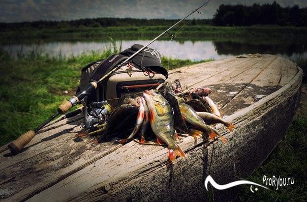 Оснастка для микроджига — Здесь рыба