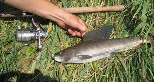 рыбалка на хариуса