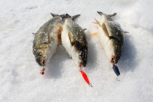 Ловля гольца зимой