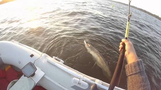 Ловля сома с лодки фото