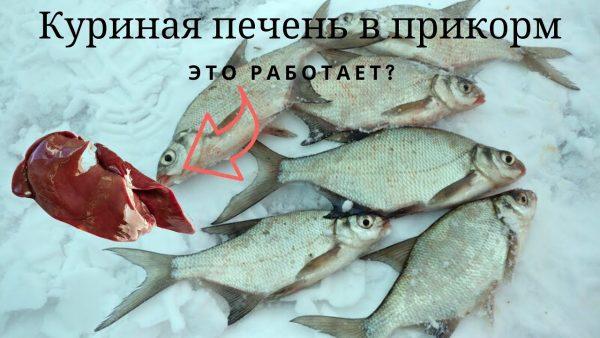 ВИДЕО: Куриная печень в прикорм, это работает!!! Рыбалка зимой на леща 2020