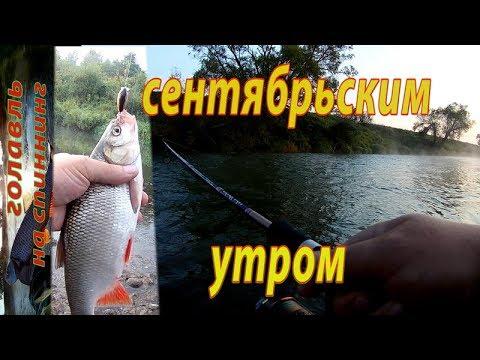 ВИДЕО: Ловля ГОЛАВЛЯ на спиннинг в сентябре. Рыбалка на реке.