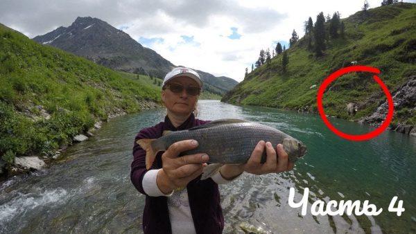 ВИДЕО: Поход на Озеро Тальмень 4 часть Хариус ловится с каждым забросом