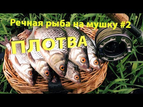 ВИДЕО: Речная рыба на мушку #2. Ловля весенней плотвы.
