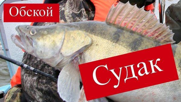 ВИДЕО: Рыбачим на Обском море в Спирино