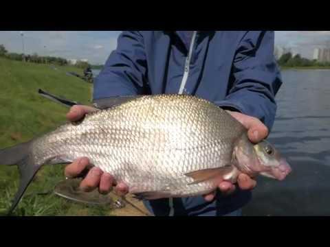 ВИДЕО: Рыбалка на реке Москва.Братеевские лещи.Секреты ловли леща