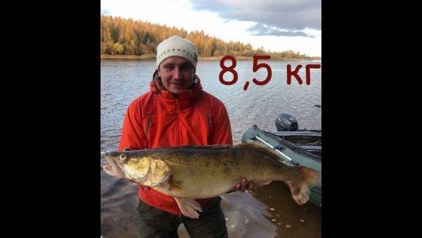 ВИДЕО: Трофейный судак 8500 кг на Рыбинском водохранилище без эхолота
