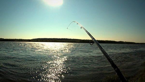ВИДЕО: ВОТ ЭТО ЛЕЩИ! ПОПАЛ НА КЛЕВ! Отличная фидерная рыбалка / МаслаковTV