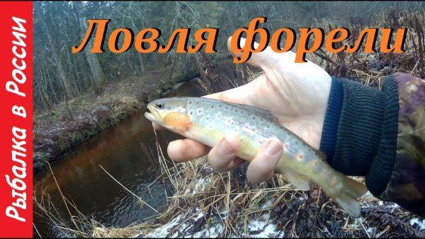 ВИДЕО: Ловля ручьевой форели на малых реках