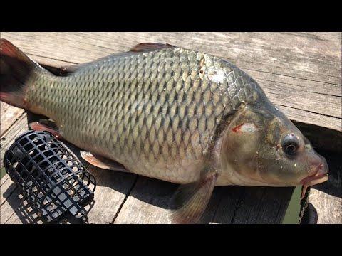 ВИДЕО: Ловля карпа на фидер | рыбалка на карпа и карася | рыбалка на фидер летом | ловля на фидер 2020