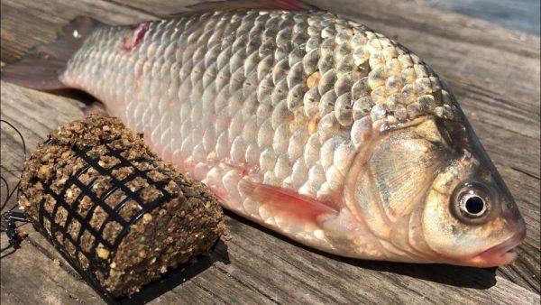 ВИДЕО: Рыбалка на донку | ловля карася на донку | рыбалка на карася | как ловить на донку | рыбалка 2020