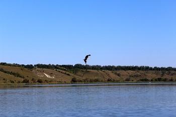 Корочанское водохранилище фото
