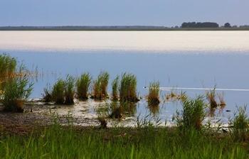 Озеро Чаны фото