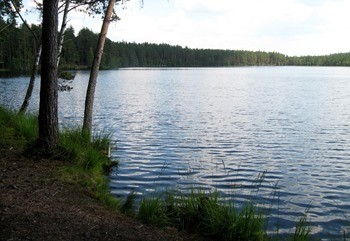 Пионерское озеро фото